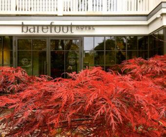 Forrest Yogareise Yogawochenende Til Schweiger Barefoot Hotel Timmendorfer Strand Ostsee Herbst